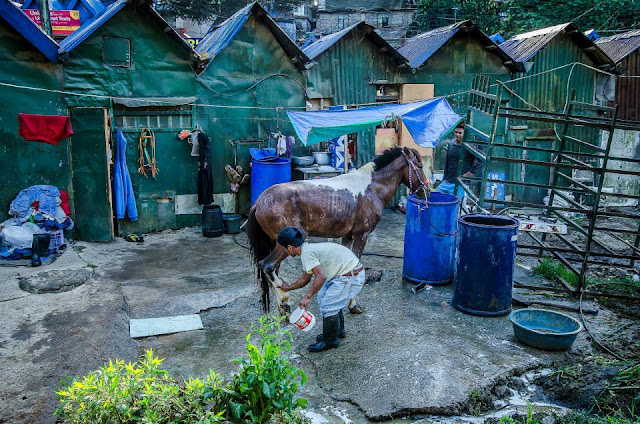 General rule: No horse gets to their day's business (horseback rental) without getting a decent bath