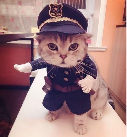Cute Cat in Police Costume