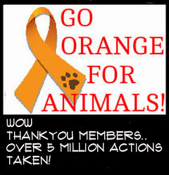 Let's turn Facebook Orange for Animal Cruelty Awareness