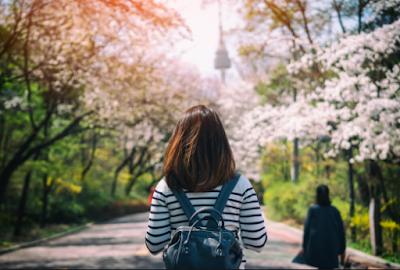 Waktu yang Tepat Melihat Bunga Sakura Mekar