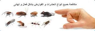 شركة مكافحة حشرات في بدر خيبر العلا الحناكيه بالمدينه المنوره