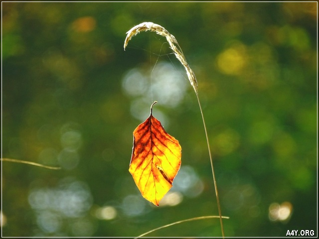 chiếc lá vàng cuối tháng 9