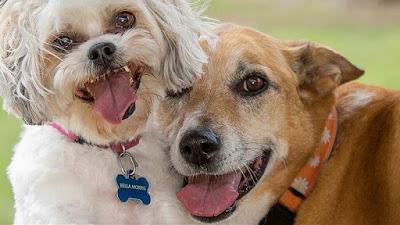 صور كلاب 2021 صور كلب صوركلاب مختلفة الانواع