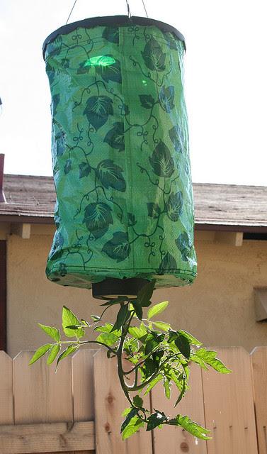 Invento para cultivar tomateras o pimientos en el techo