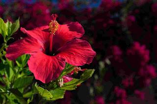 healthy flowers health basic tips
