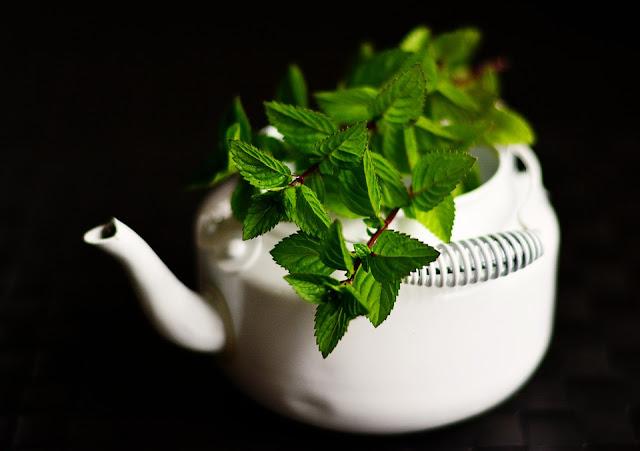Medicinal plantinnovative business ideasunique business ideastop business ideas