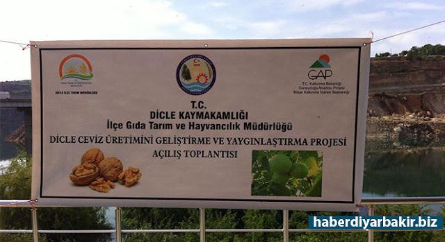 DİYARBAKIR-Gıda Tarım ve Hayvancılık Diyarbakır İl Müdürlüğü, Ceviz Yetiştiriciliğinin Geliştirilmesi Projesi kapsamında, Dicle ilçesindeki çiftçilere 284 dekar alana dikilebilecek ceviz fidanı dağıttı.