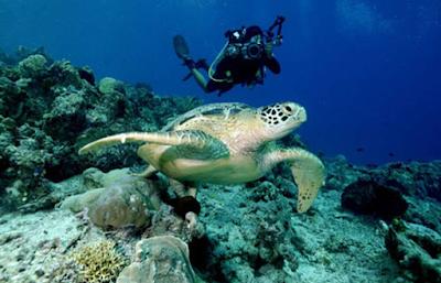 Keindahan Alam Bawah Laut Kepulauan Derawan Kaltim