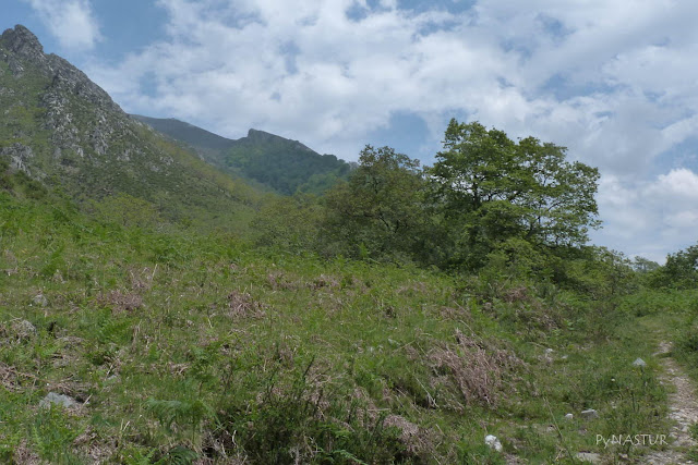 Hayedo y Vallina de Luiña