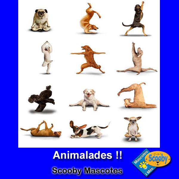 http://www.scoobymascotes.com/2016/11/yoga-perruno.html