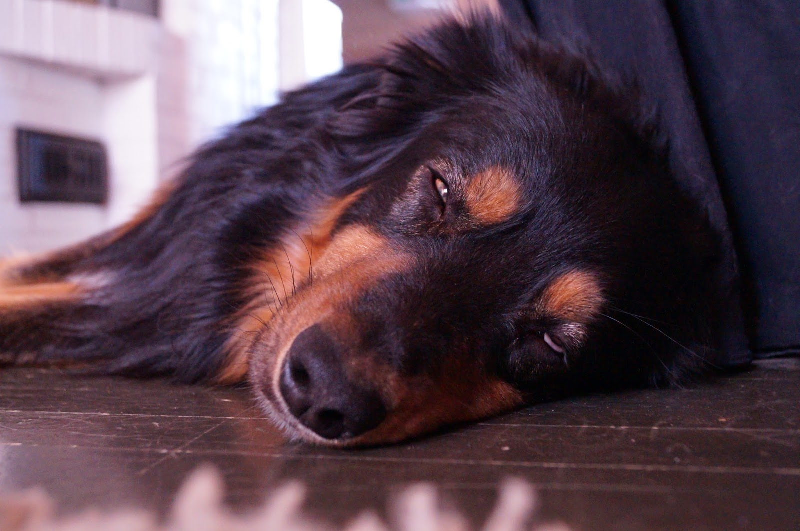 Imusolmukesyöpä Koiralla