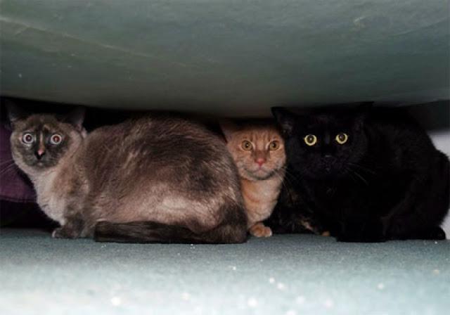 Δείτε πως οι γάτες διαισθάνονται σεισμό αρκετά δευτερόλεπτα πριν συμβεί