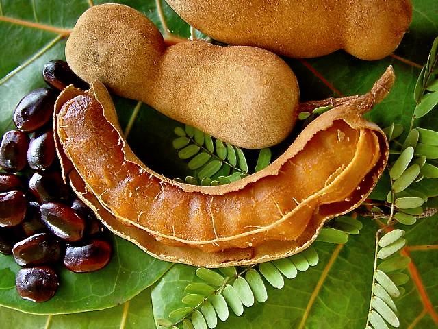 tamarind, tamarind fruit