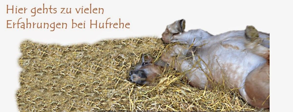 http://www.tierheilkundezentrum.eu/pferde/krankheiten/hufrehe/hufrehe-erfahrungen/