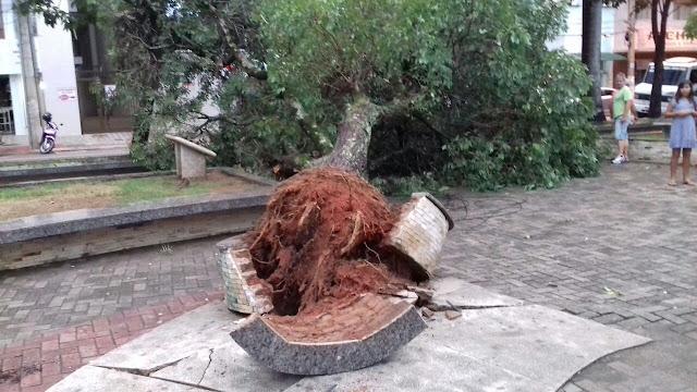Árvore cai e assusta frequentadores da praça central de Afonso Cláudio