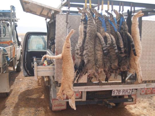 Pembantaian Kucing Di Australia