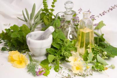 5 Tumbuhan Herbal Alami Buat Obat Maag