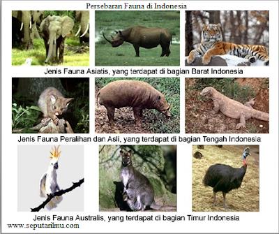 Persebaran Fauna di Inodensia Lengkap