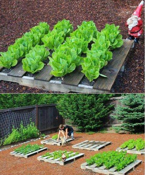 Garden and Farms: Pallets for raised bed gardening! .. low ...