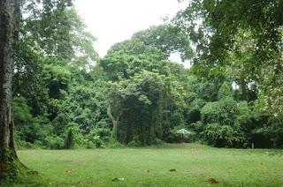 Hutan Lindung Suranadi