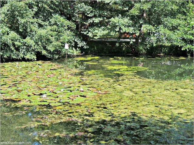 Estanque del First Nations Garden del Jardín Botánico de Montreal