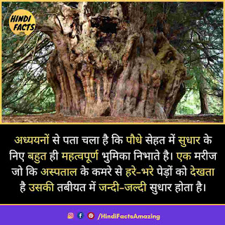 information about tree in hindi