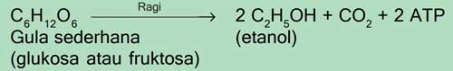 Reaksi fermentasi Saccharomyces cerevisiae