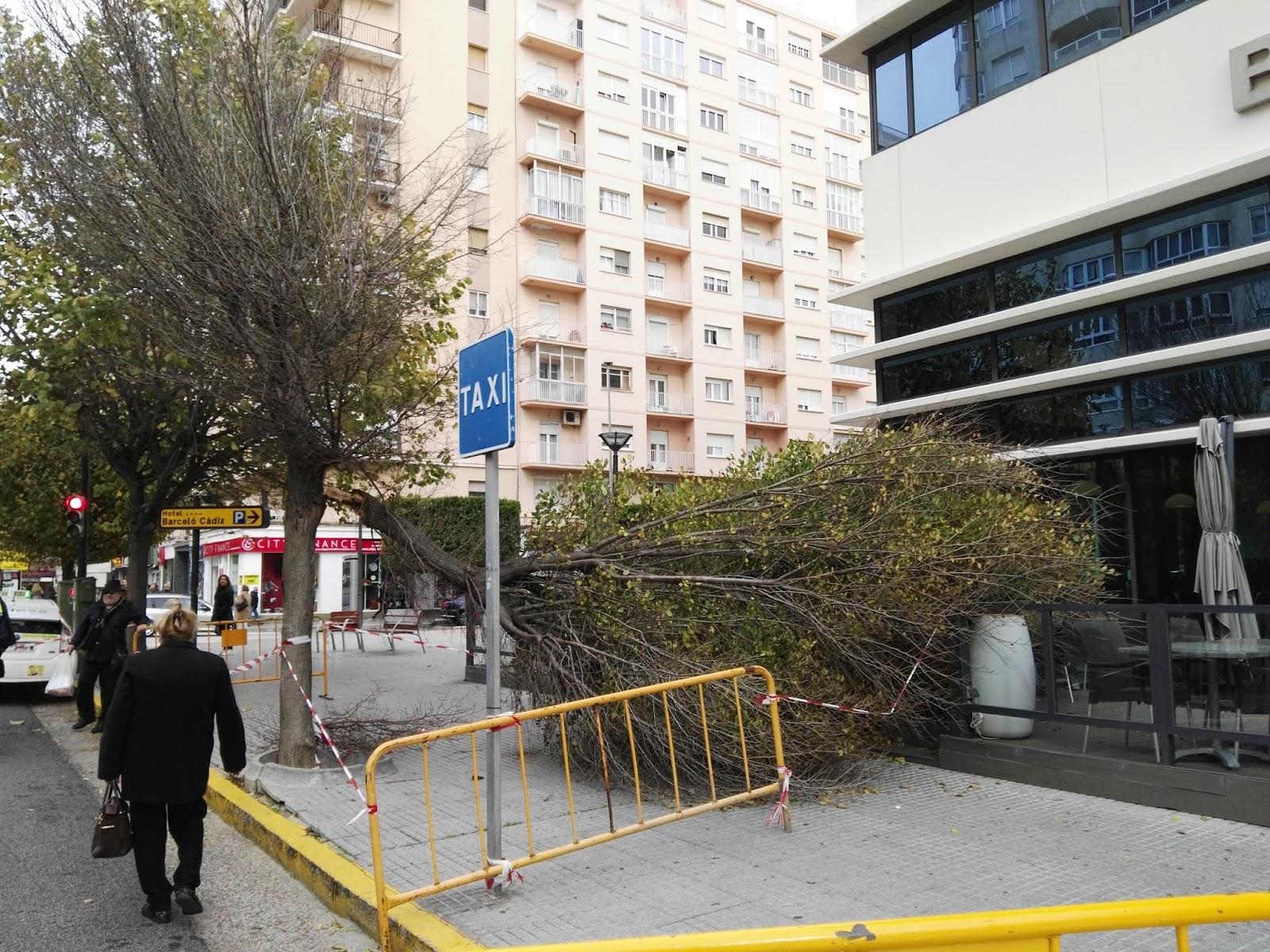 La Azotea De Los Claveles El Viento Derriba Un árbol Sobre