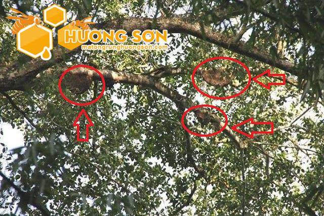 Mật ong rừng có bị đóng đường không?