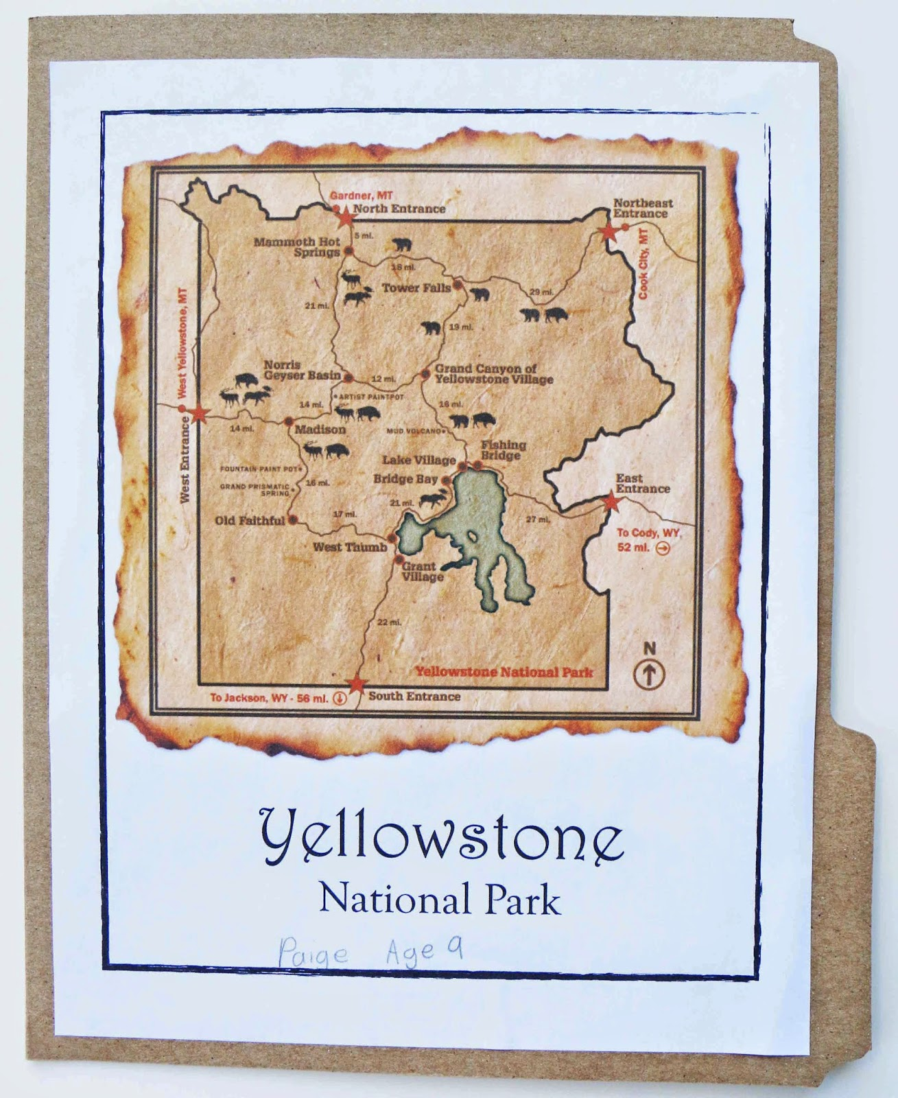 Carrot Top X 3 Yellowstone National Park Lapbook Free