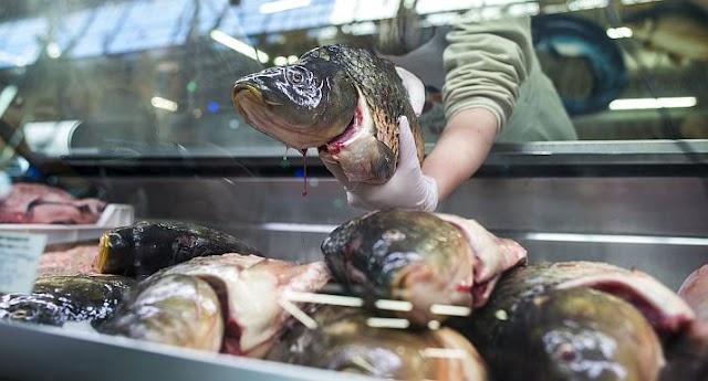 Közel tíz százalékkal emelkedhetnek a halászatra fordítható EU-s források
