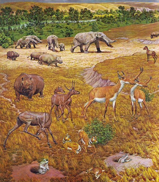 Ancient 'Texas Serengeti' had elephant-like animals, rhinos, alligators and more