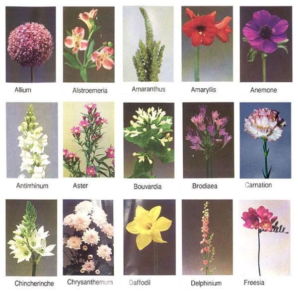 Wedding Flowers Names: General Information