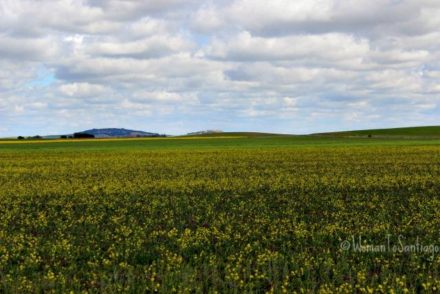 foto del campo con flores