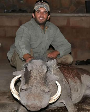 No Animal Is Safe From Don Trump Jr Here He With His Trophy Wart Hog
