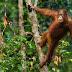 Η μισή γη χρειάζεται να δοθεί πίσω στην άγρια φύση για να σωθεί ο πλανήτης