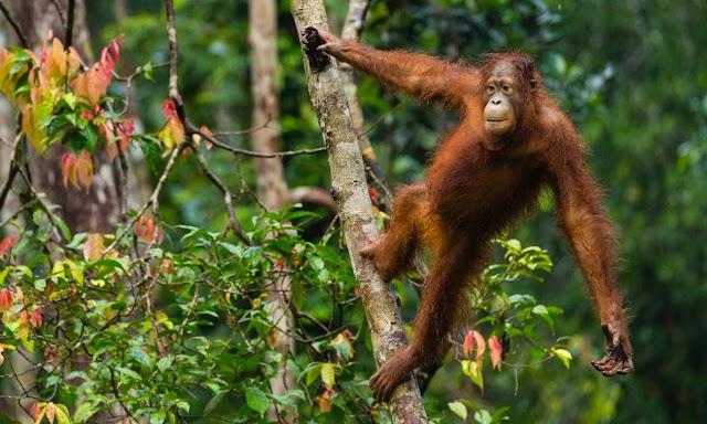 Δώστε τη μισή γη πίσω στην άγρια φύση, για να σωθεί ο πλανήτης