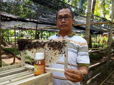 harga madu asli sumbawa