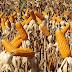 SC passará a importar milho do Paraguai