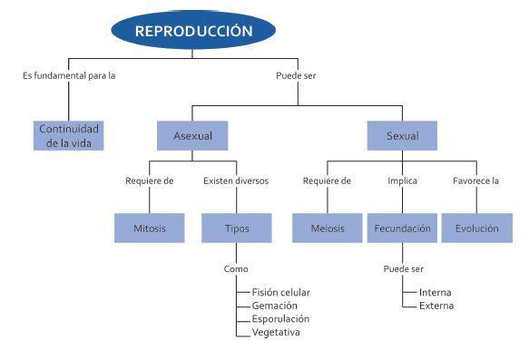 Reproduccion sexual y asexual a nivel celular