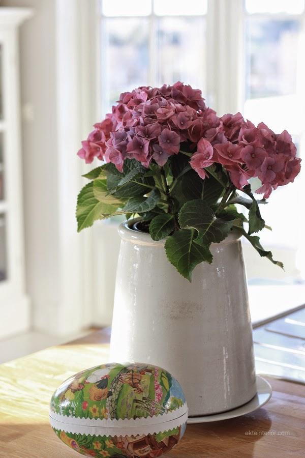 Hortensia blomst krukke