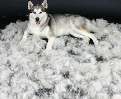como controlar la caida de pelo del perro