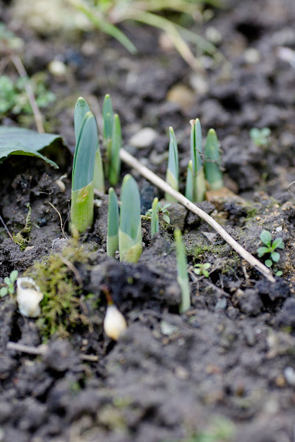 Garten im Februar, Pomponetti