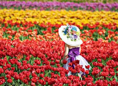 Bunga Tulip Berbagai Warna