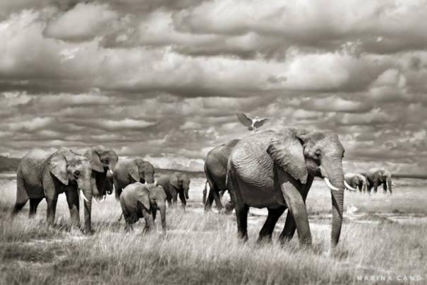 Solid Planet: Best Wild Animals Photography By Marina Cano