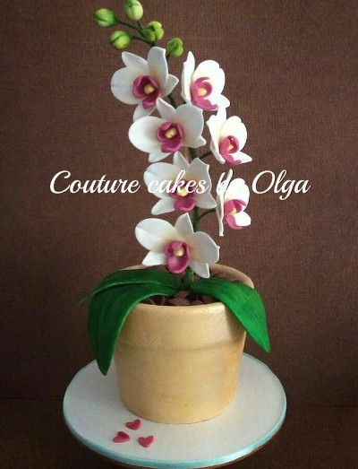 Pot dan bunga anggrek yang cantik bisa dimakan. Ini adalah karya seni yang dibuat oleh Couture Cakes by Olga.