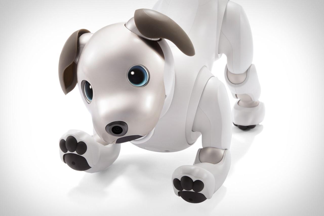 Fransız köpeği - hot dog analogu