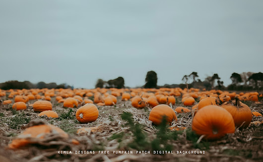 Pumpkin Patch vol.2 Free Digital Background for Photographers