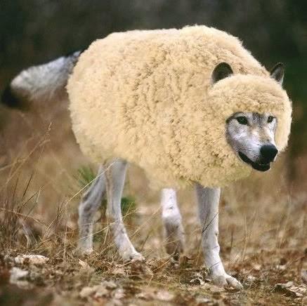 Hasil gambar untuk gambar serigala berbulu domba