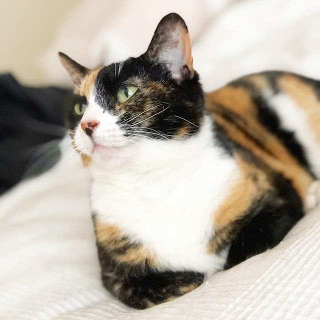 I wasn't planning on adopting a cat this year, but sometimes life takes you in different directions just when you need it. Here's how I came to meet my purrfect Poppy cat...